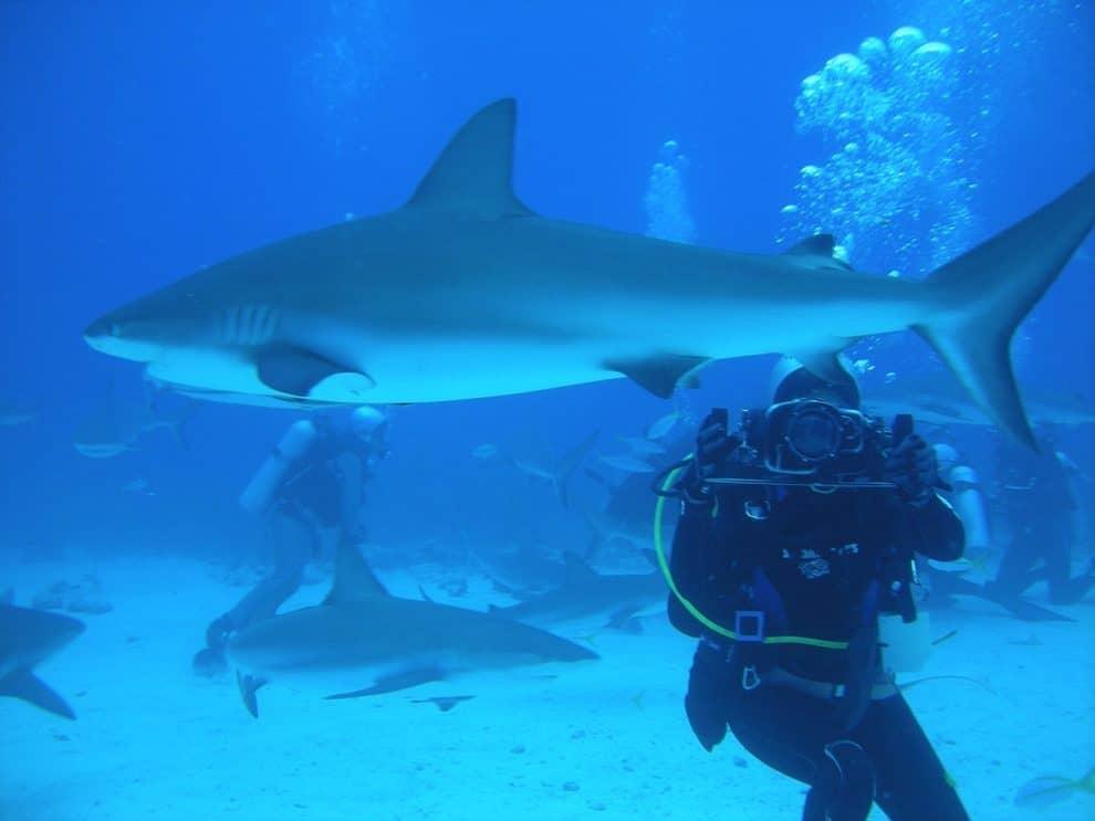 Bahamas duiken
